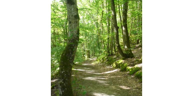 La Forêt Cinéraire